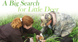 A Big Search For Little Deer by Matthew Stoffel, writing for South Dakota Conservation Digest